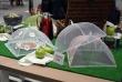Cilio защита от насекомых